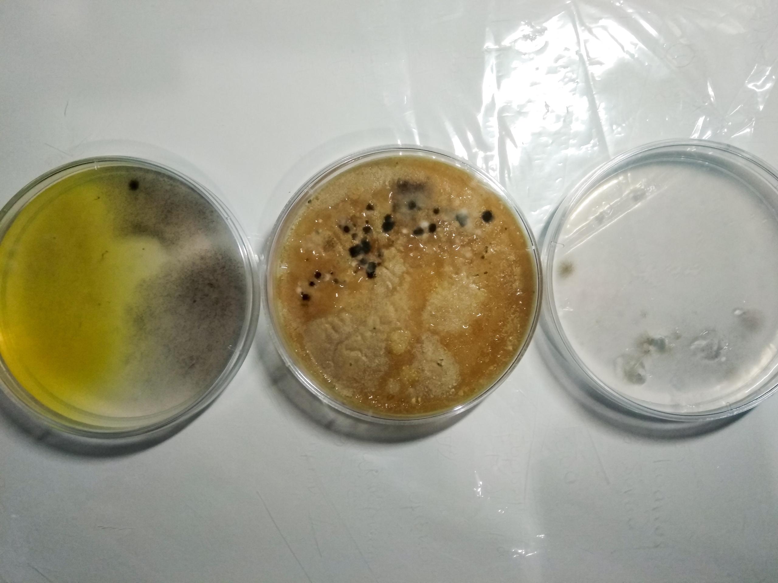 ΡΟΜΠΟΤΕΧΝΙΑ - καλλιέργεια μικροβίων
