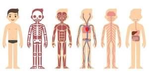 το σώμα μου 4