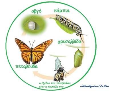 κύκλο ο κύκλος ζωής της πεταλούδας