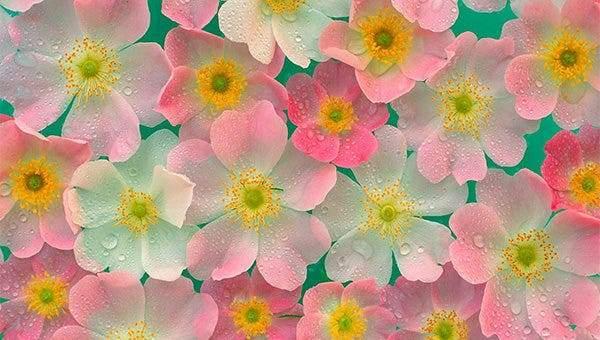 Beautiful Flower Wallpapers