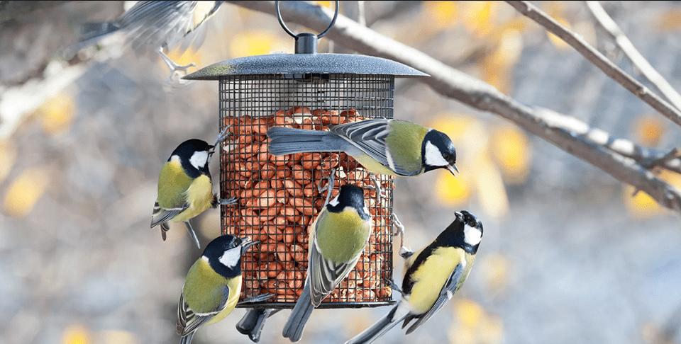 birds main